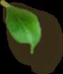 Left Leaf 2