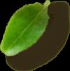 Left Leaf 3