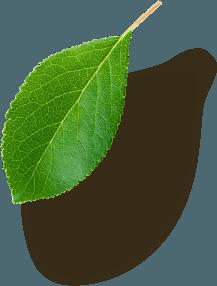 Left Leaf 5