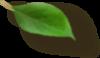 Right Leaf 2