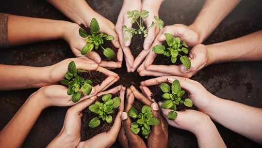 seven pairs of hands holding little plants